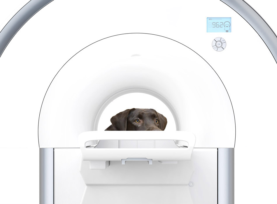 A dog being MRI scanned after being referred for extra investigations by Pattenden Vets.