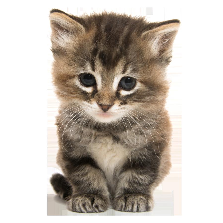 A cute kitten.