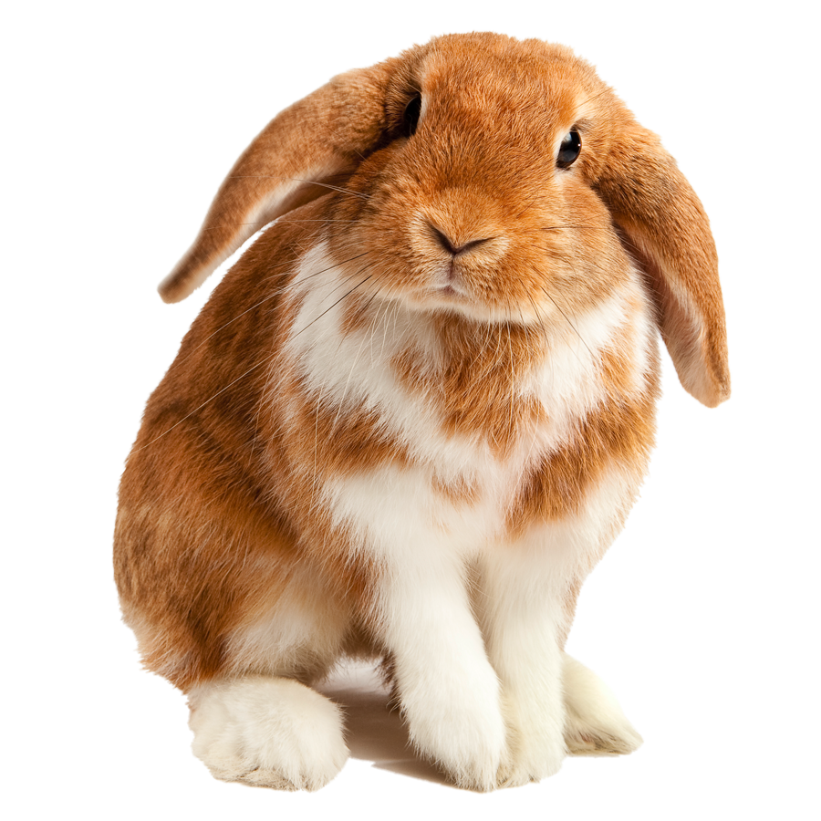 A fluffy rabbit.