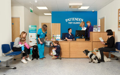 The busy reception at Pattenden Vets. Pattenden Vets are a small independent veterinary practice in Marden, Kent.