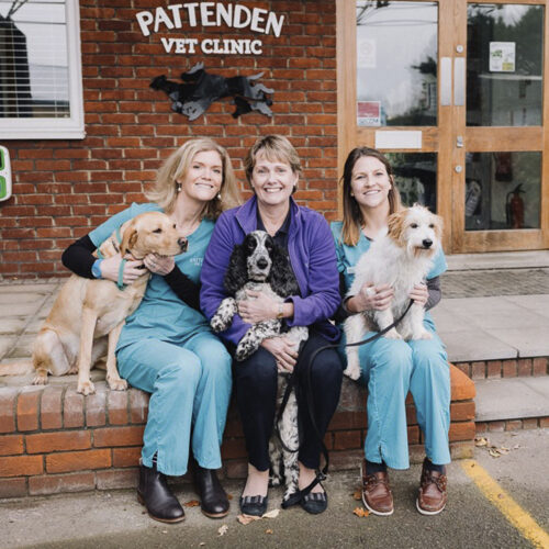 The company directors with their pets at Pattenden Vets. Pattenden Vets are a small independent veterinary practice in Marden, Kent.